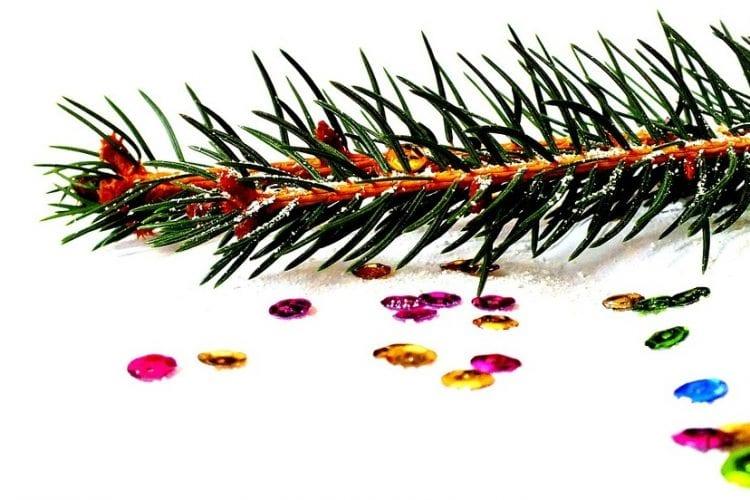 spruce-1040050_960_720